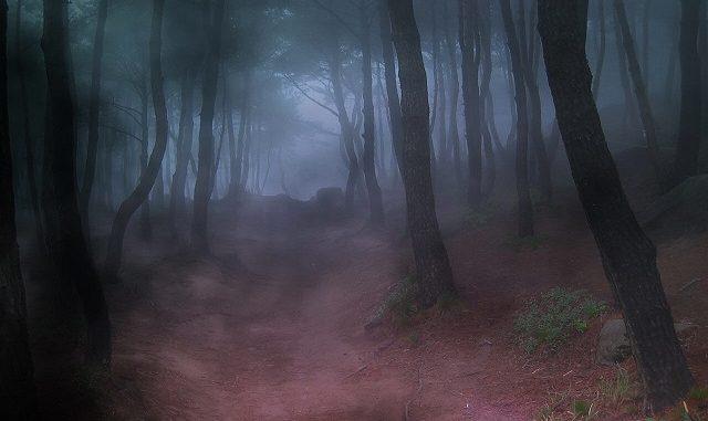 Hutan Para Roh