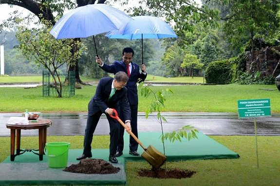 Tanam Pohon Bersama, Jokowi Payungi Presiden Korsel