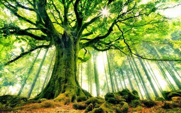 Pada Alam Kita Menanam
