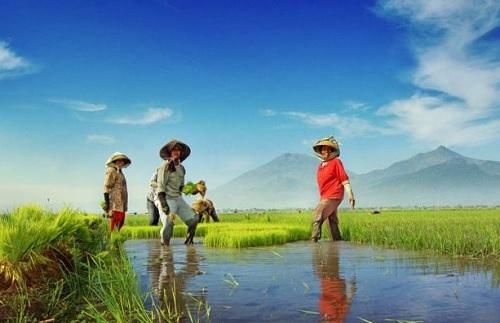 Ekonomi Politik Perdesaan; Hadirnya Negara ke Desa