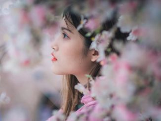 Gugur Bunga Sakura